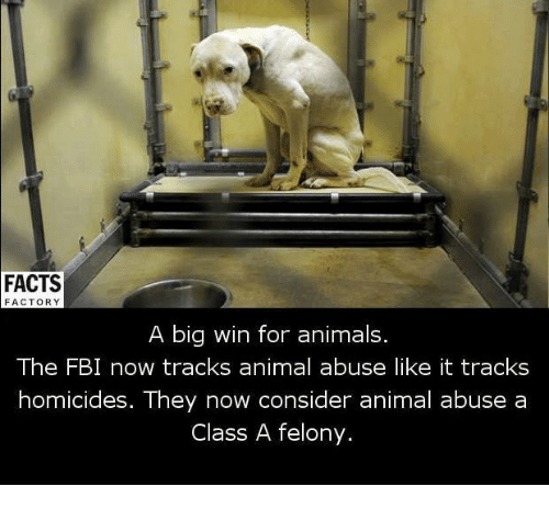 Animal Abuse: FACTS  FACTORY  A big win for animals.  The FBI now tracks animal abuse like it tracks  homicides. They now consider animal abuse a  Class A felony