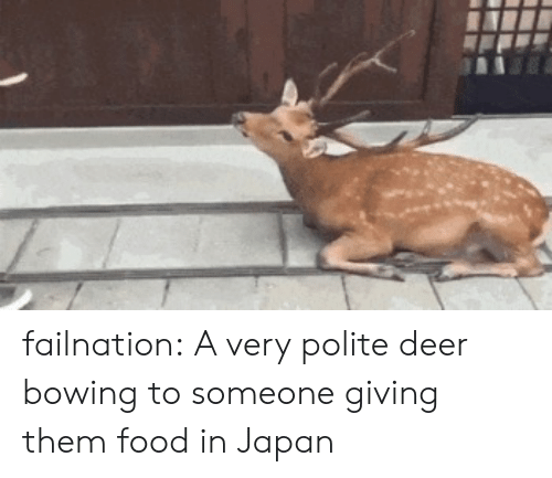 Very Polite: failnation:  A very polite deer bowing to someone giving them food in Japan
