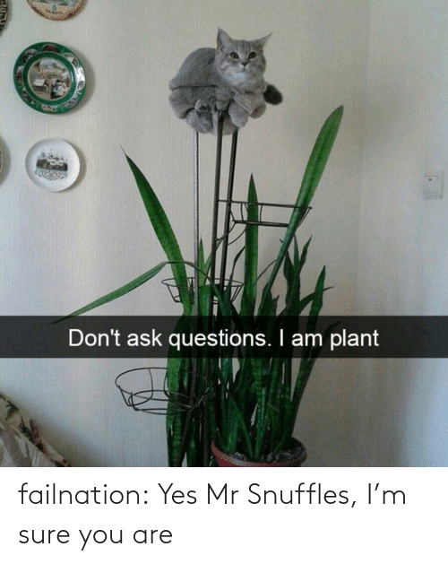 Mr: failnation:  Yes Mr Snuffles, I'm sure you are