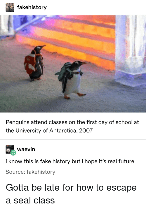 first day of school: fakehistory  Penguins attend classes on the first day of school at  the University of Antarctica, 2007  waevin  i know this is fake history but i hope it's real future  Source: fakehistory Gotta be late for how to escape a seal class