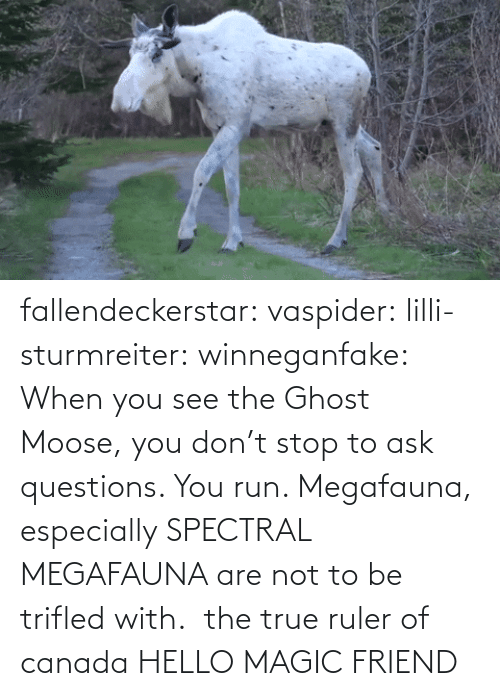 questions: fallendeckerstar: vaspider:  lilli-sturmreiter:  winneganfake: When you see the Ghost Moose, you don't stop to ask questions. You run. Megafauna, especially SPECTRAL MEGAFAUNA are not to be trifled with. the true ruler of canada  HELLO MAGIC FRIEND