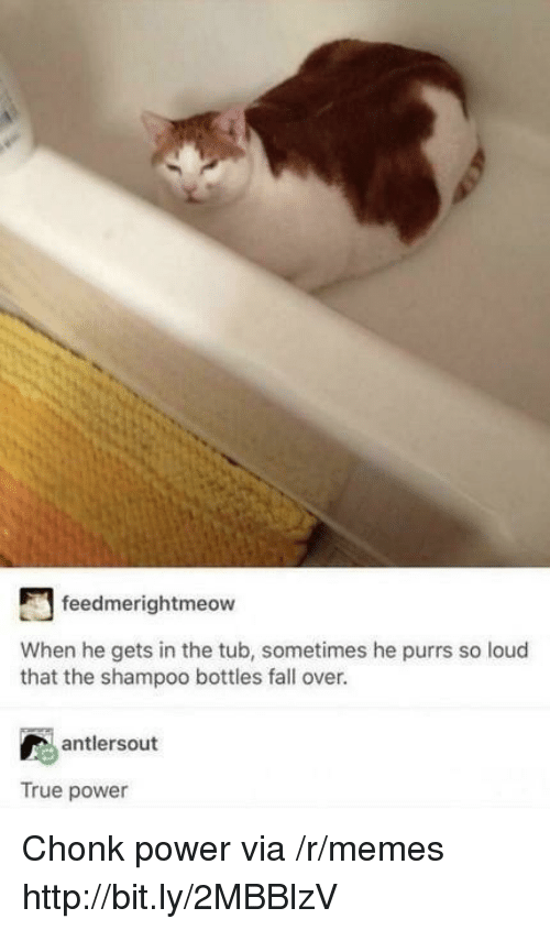 fall over: feedmerightmeow  When he gets in the tub, sometimes he purrs so loud  that the shampoo bottles fall over.  antlersout  True power Chonk power via /r/memes http://bit.ly/2MBBlzV