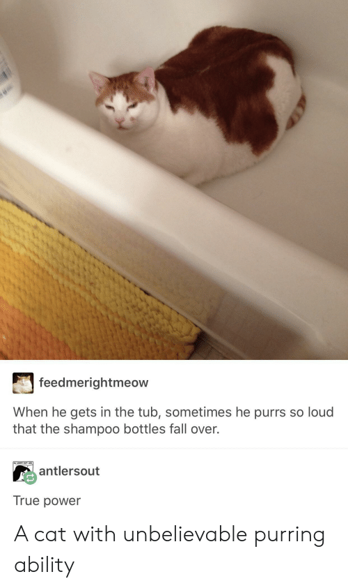 fall over: feedmerightmeow  When he gets in the tub, sometimes he purrs so loud  that the shampoo bottles fall over.  antlersout  True power A cat with unbelievable purring ability