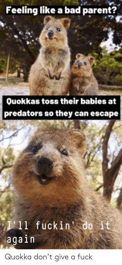 Do it Again: Feeling like a bad parent?  Ouokkas toss their babies at  predators so they can escape  I11 fuckin do it  again Quokka don't give a fuck