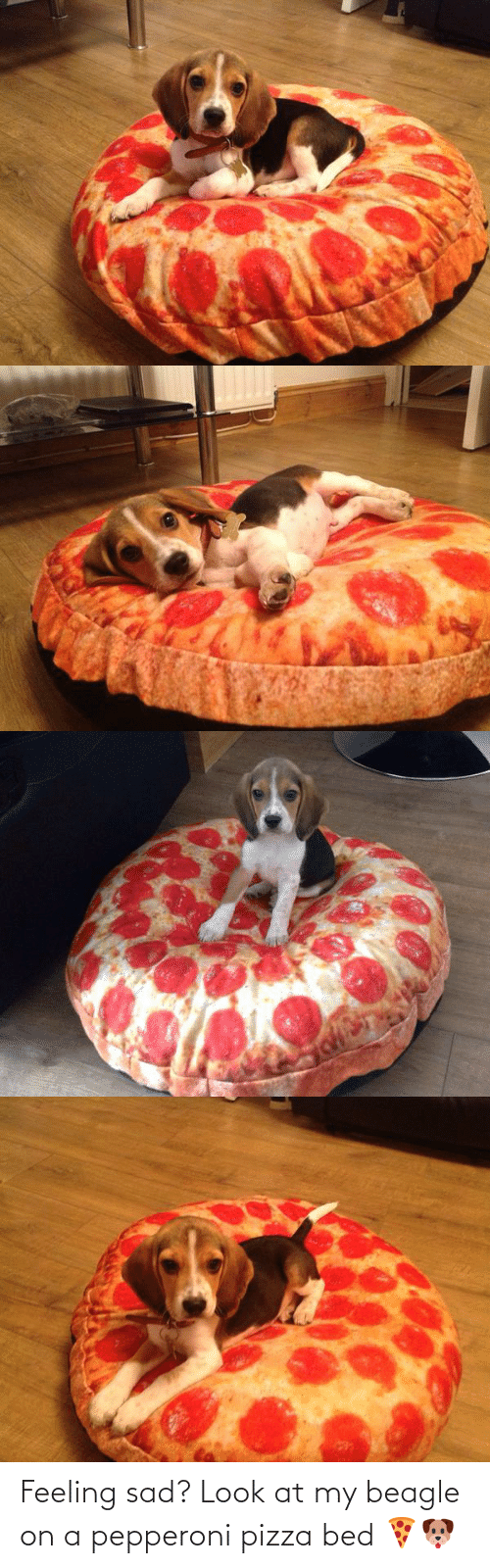 bed: Feeling sad? Look at my beagle on a pepperoni pizza bed 🍕🐶
