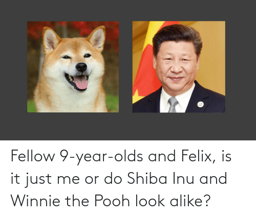 Shiba Inu: Fellow 9-year-olds and Felix, is it just me or do Shiba Inu and Winnie the Pooh look alike?