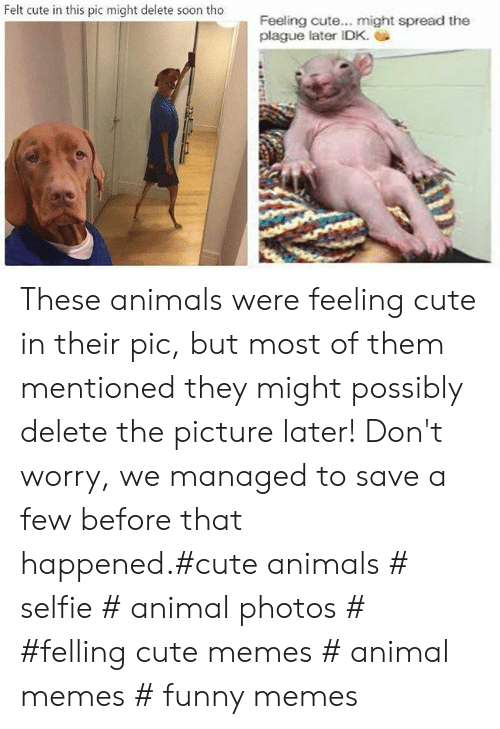 Animals, Cute, and Cute Animals: Felt cute in this pic might delete soon tho  Feeling cute... might spread the  plague later IDK. These animals were feeling cute in their pic, but most of them mentioned they might possibly delete the picture later! Don't worry, we managed to save a few before that happened.#cute animals # selfie # animal photos # #felling cute memes # animal memes # funny memes