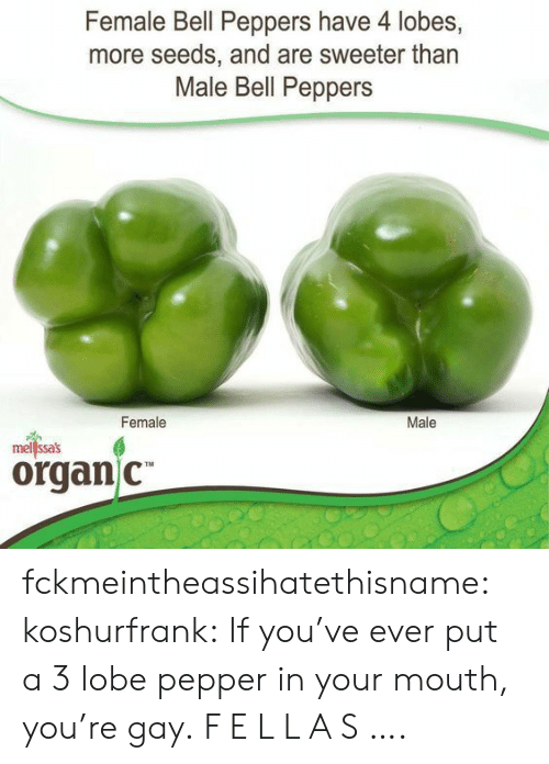 organ: Female Bell Peppers have 4 lobes,  more seeds, and are sweeter than  Male Bell Peppers  Female  Male  mellssas  organ C fckmeintheassihatethisname:  koshurfrank: If you've ever put a 3 lobe pepper in your mouth, you're gay. F E L L A S ….