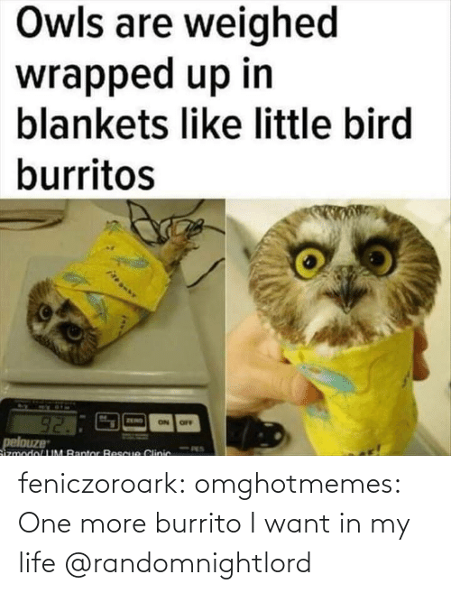 burrito: feniczoroark:  omghotmemes:  One more burrito I want in my life   @randomnightlord