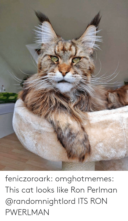 A Href: feniczoroark:  omghotmemes:  This cat looks like Ron Perlman   @randomnightlord    ITS RON PWERLMAN