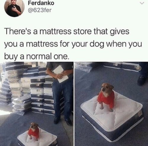 Mattress: Ferdanko  @623fer  There's a mattress store that gives  you a mattress for your dog when you  buy a normal one.