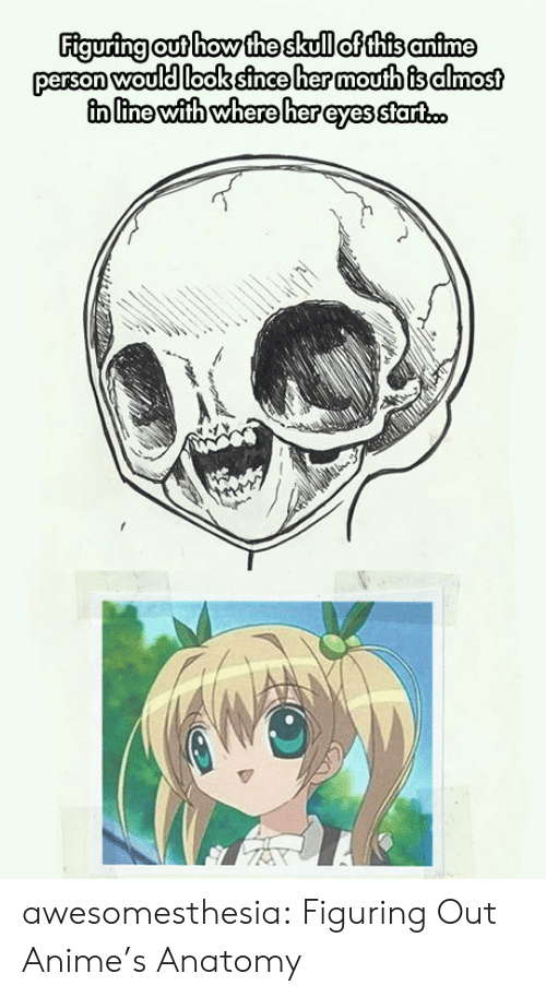 Anime, Tumblr, and Blog: Figuring out how the skull of this anime  person would look since her moufth is almost  in line with where her eyes start.c. awesomesthesia:  Figuring Out Anime's Anatomy