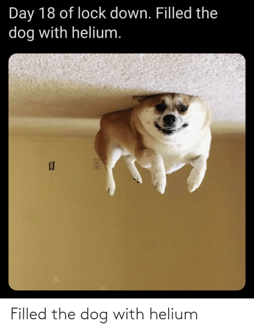 the dog: Filled the dog with helium