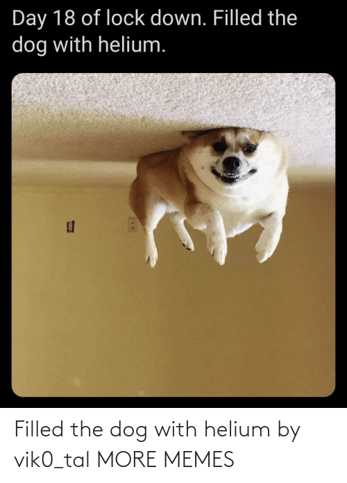 tal: Filled the dog with helium by vik0_tal MORE MEMES