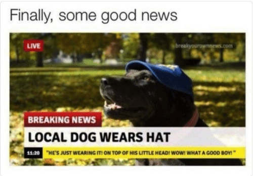 Head, News, and Wow: Finally, some good news  LIVE  breakyourownnews.com  BREAKING NEWS  LOCAL DOG WEARS HAT  11:20  HE'S JUST WEARING IT! ON TOP OF HIS LITTLE HEAD! WoW! WHAT A GOOD BOY!""