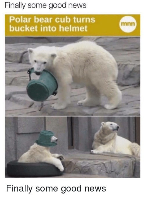 News, Bear, and Good: Finally some good news  Polar bear cub turns  bucket into helmet  mnn Finally some good news