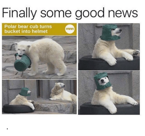 News, Bear, and Good: Finally some good news  Polar bear cub turns  bucket into helmet  mnn .