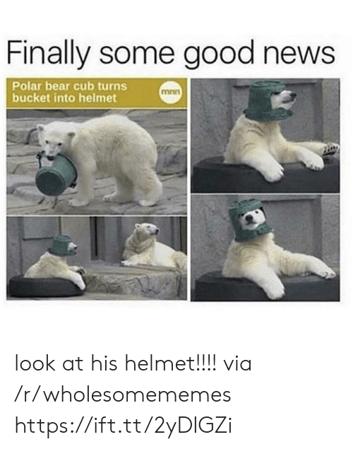 News, Bear, and Good: Finally some good news  Polar bear cub turns  bucket into helmet  mnn look at his helmet!!!! via /r/wholesomememes https://ift.tt/2yDIGZi
