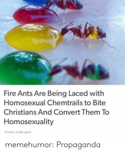 chemtrails: Fire Ants Are Being Laced with  Homosexual Chemtrails to Bite  Christians And Convert Them To  Homosexuality  Source: whats-guud memehumor:  Propaganda