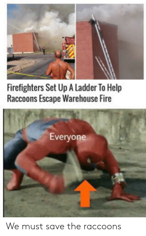 Fire, Help, and The Raccoons: Firefighters Set Up A Ladder To Help  Raccoons Escape Warehouse Fire  Everyone We must save the raccoons
