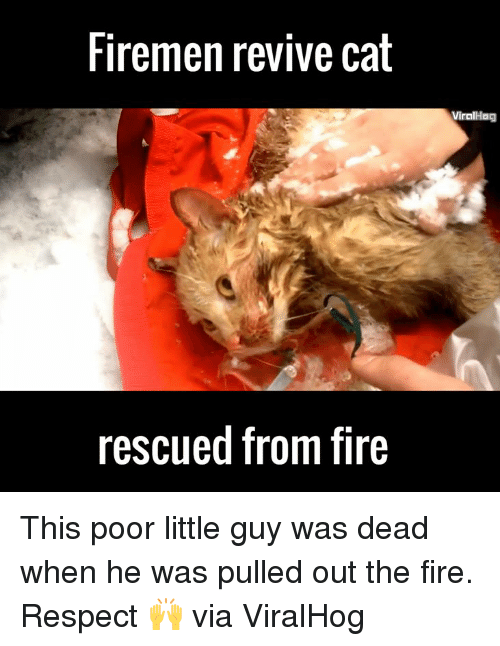 Firemen: Firemen revive cat  rescued from fire  Viral Hag This poor little guy was dead when he was pulled out the fire. Respect 🙌  via ViralHog