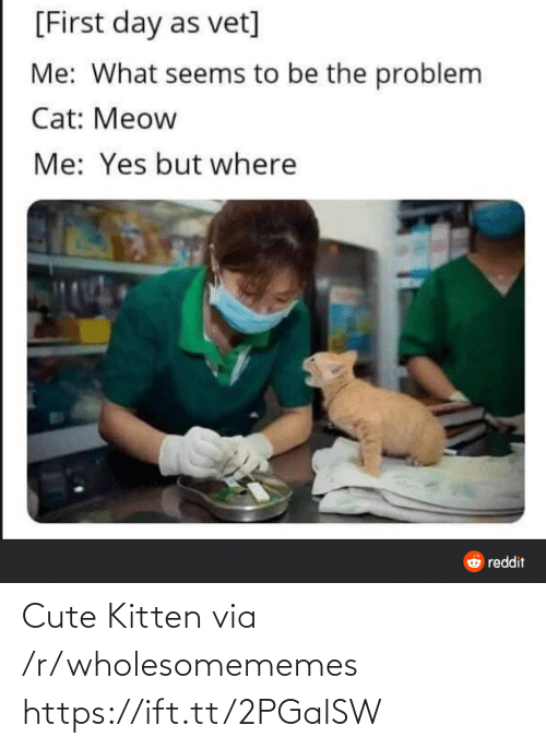 seems: [First day as vet]  Me: What seems to be the problem  Cat: Meow  Me: Yes but where  O reddit Cute Kitten via /r/wholesomememes https://ift.tt/2PGalSW