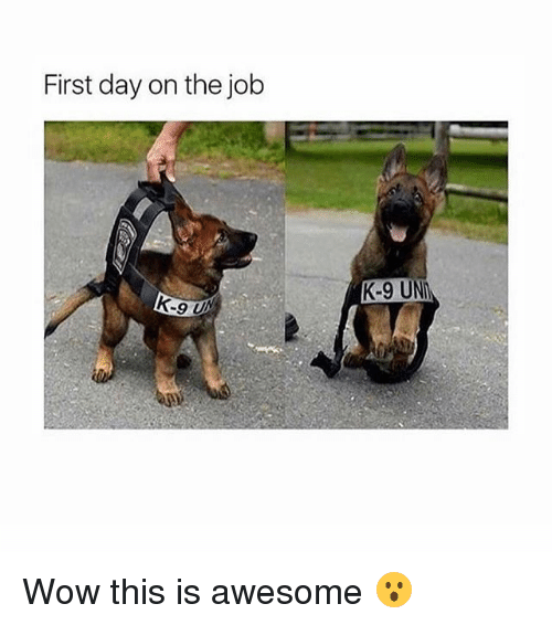 k-9: First day on the job  K-9 UN Wow this is awesome 😮