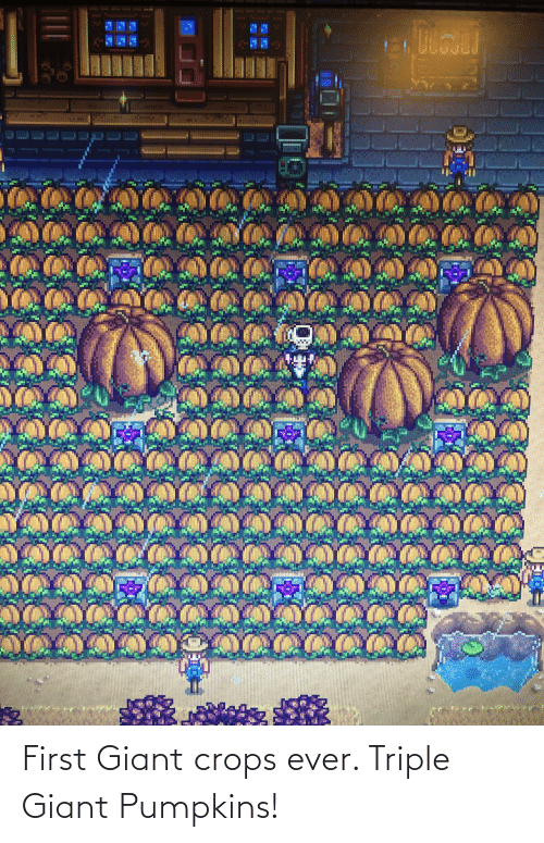 Giant: First Giant crops ever. Triple Giant Pumpkins!