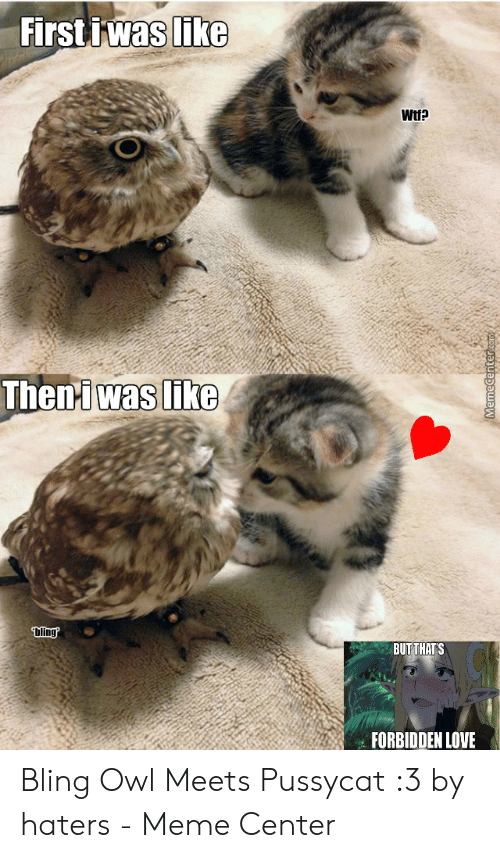 Haters Meme: First iwas like  Wtf?  Theni was like  Dling?  BUT THATS  FORBIDDEN LOVE  Mww  MemeCenter.com Bling Owl Meets Pussycat :3 by haters - Meme Center