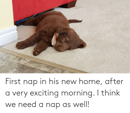 exciting: First nap in his new home, after a very exciting morning. I think we need a nap as well!