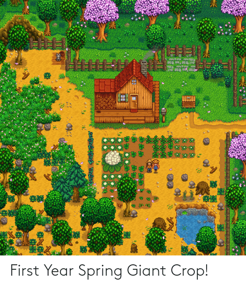 Giant: First Year Spring Giant Crop!