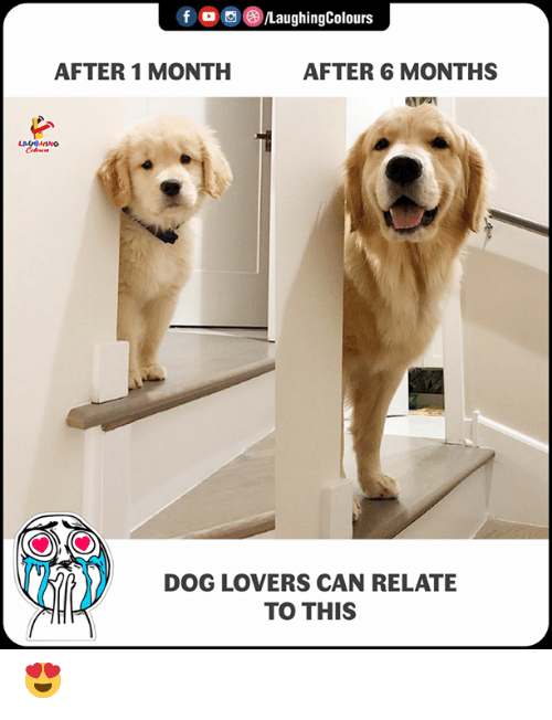 Indianpeoplefacebook, Dog, and Can: fLaughingColours  AFTER 1 MONTH  AFTER 6 MONTHS  DOG LOVERS CAN RELATE  TO THIS 😍