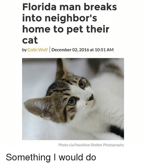 Florida Man, Funny, and Florida: Florida man breaks  into neighbor's  home to pet their  cat  by Colin Wolf December 02, 2016 at 10:51 AM  Photo via Pawsitive Shelter Photography Something I would do