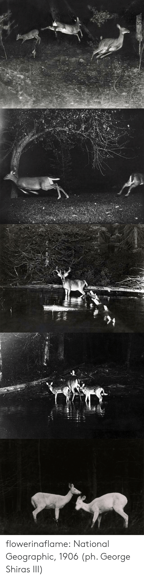 Geographic: flowerinaflame: National Geographic, 1906 (ph. George Shiras III)