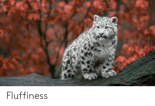 Fluffiness: Fluffiness