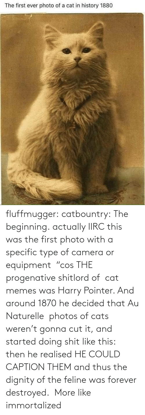 "Cats: fluffmugger:  catbountry: The beginning. actually IIRC this was the first photo with a specific type of camera or equipment  ""cos THE progenative shitlord of  cat memes was Harry Pointer. And around 1870 he decided that Au Naturelle  photos of cats weren't gonna cut it, and started doing shit like this:  then he realised HE COULD CAPTION THEM and thus the dignity of the feline was forever destroyed.     More like immortalized"