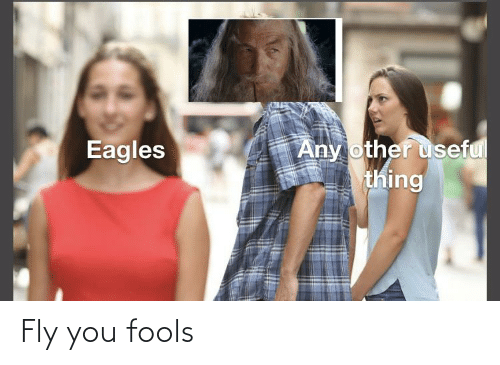 fly: Fly you fools