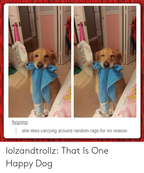 She Likes: flygoing  she likes carrying around random rags for no reason lolzandtrollz:  That Is One Happy Dog
