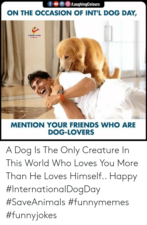 He Loves: foC/LaughingColours  ON THE OCCASION OF INT'L DOG DAY,  LAUGHING  Celewrs  MENTION YOUR FRIENDS WHO ARE  DOG-LOVERS A Dog Is The Only Creature In This World Who Loves You More Than He Loves Himself.. Happy #InternationalDogDay #SaveAnimals #funnymemes #funnyjokes
