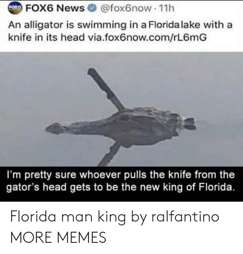 Pulls: FOK  FOX6 News @fox6now 11h  An alligator is swimming in a Florida lake with a  knife in its head via.fox6now.com/rL6mG  I'm pretty sure whoever pulls the knife from the  gator's head gets to be the new king of Florida. Florida man king by ralfantino MORE MEMES