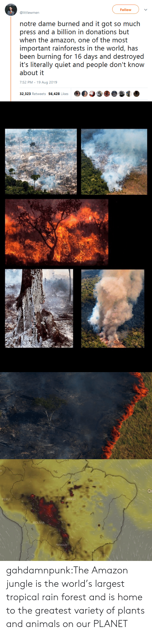 burned: Follow  @littlewmen  notre dame burned and it got so much  press and a billion in donations but  when the amazon, one of the most  important rainforests in the world, has  been burning for 16 days and destroyed  it's literally quiet and people don't know  about it  7:52 PM - 19 Aug 2019  32,323 Retweets 56,428 Likes   Q  PERU  BRASIL  BOLIVIA  PARAGUAN gahdamnpunk:The Amazon jungle is the world's largest tropical rain forest and is home to the greatest variety of plants and animals on our PLANET
