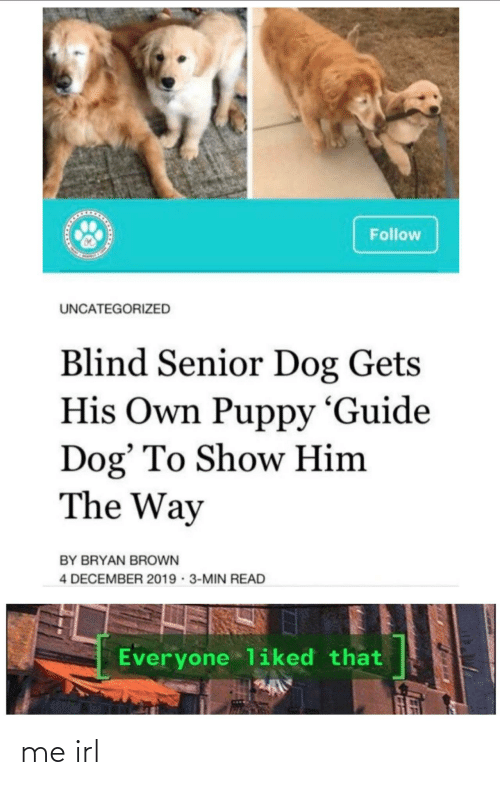 Puppy: Follow  UNCATEGORIZED  Blind Senior Dog Gets  His Own Puppy 'Guide  Dog' To Show Him  The Way  BY BRYAN BROWN  4 DECEMBER 2019 · 3-MIN READ  Everyone liked that me irl