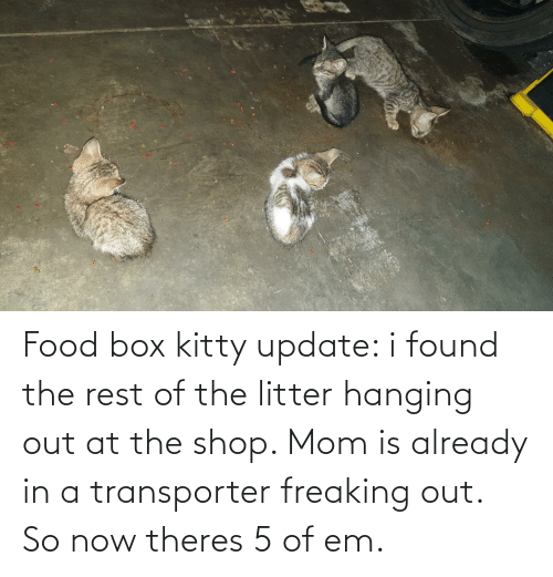 freaking: Food box kitty update: i found the rest of the litter hanging out at the shop. Mom is already in a transporter freaking out. So now theres 5 of em.