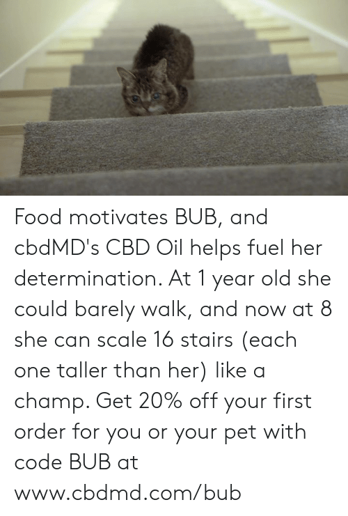 determination: Food motivates BUB, and cbdMD's CBD Oil helps fuel her determination. At 1 year old she could barely walk, and now at 8 she can scale 16 stairs (each one taller than her)  like a champ. Get 20% off your first order for you or your pet with code BUB at www.cbdmd.com/bub