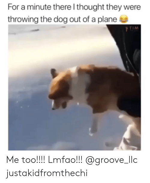 Memes, Lmfao, and Thought: For a minute there l thought they were  throwing the dog out of a plane  TIM Me too!!!! Lmfao!!! @groove_llc justakidfromthechi