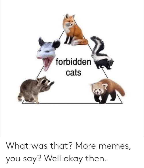 You Say: forbidden  cats What was that? More memes, you say? Well okay then.