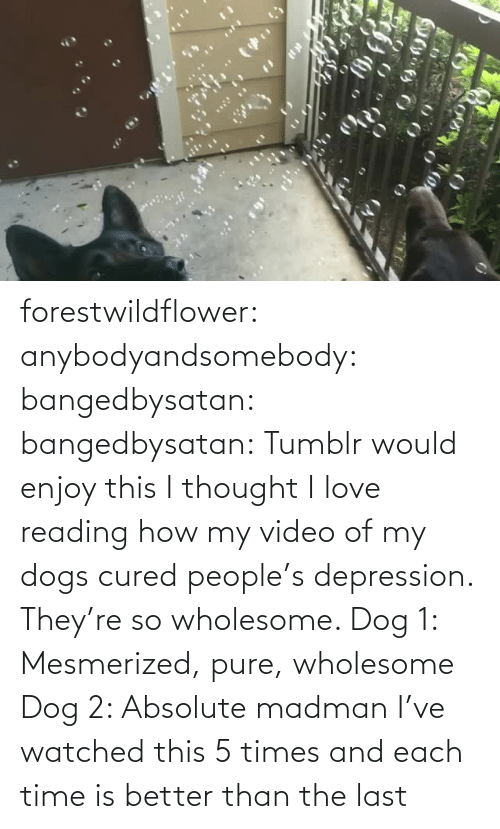 Depression: forestwildflower: anybodyandsomebody:   bangedbysatan:  bangedbysatan:  Tumblr would enjoy this I thought  I love reading how my video of my dogs cured people's depression. They're so wholesome.   Dog 1: Mesmerized, pure, wholesome Dog 2: Absolute madman   I've watched this 5 times and each time is better than the last