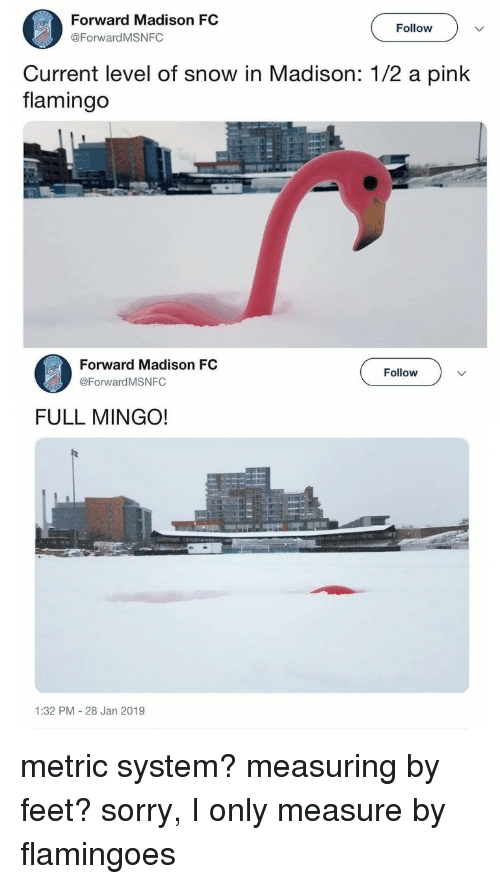 Sorry, Pink, and Snow: Forward Madison FC  @ForwardMSNFC  Follow  Current level of snow in Madison: 1/2 a pink  flamingo  Forward Madison FC  @Forward MSNFC  Follow  FULL MINGO!  1:32 PM 28 Jan 2019 metric system? measuring by feet? sorry, I only measure by flamingoes