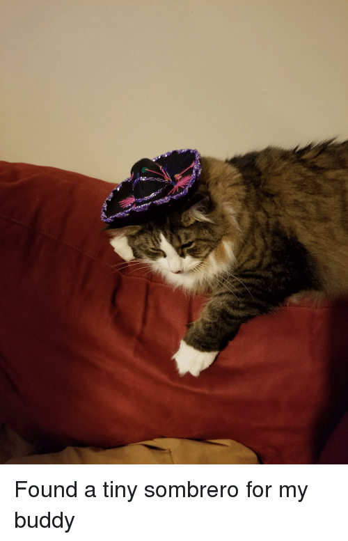 Tiny, Buddy, and For: Found a tiny sombrero for my buddy