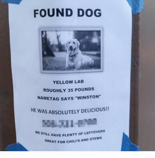 """chilis: FOUND DOG  YELLOW LAB  ROUGHLY 35 POUNDS  NAMETAG SAYS """"WINSTON""""  HE  AS ABSOLUTELY DELICIOUS!!  WE STILL HAVE PILIS  L HAVE PLENTY OF LEFTOVERS  REAT FOR CHILI'S AND STEWS"""